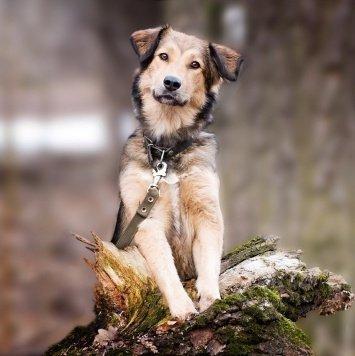Джуна - Собаки в добрые руки
