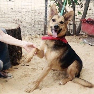 Яша - Собаки в добрые руки