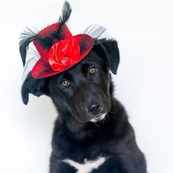 Джесса - Собаки в добрые руки