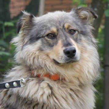 Севиль - Собаки в добрые руки
