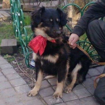 Сима - Собаки в добрые руки