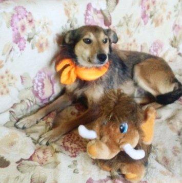 Джолли - Собаки в добрые руки