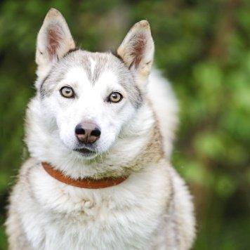 Инта - Собаки в добрые руки