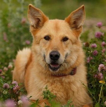 Клуни - Собаки в добрые руки