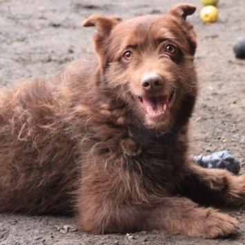 Брендон - Собаки в добрые руки