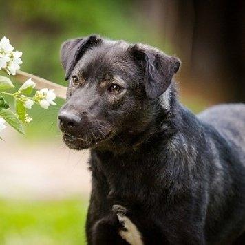 Петя - Собаки в добрые руки