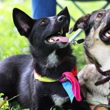 Чача - Собаки в добрые руки