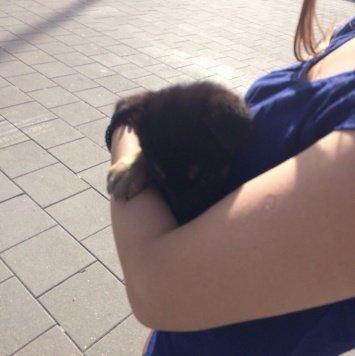 булочка - Найденные собаки