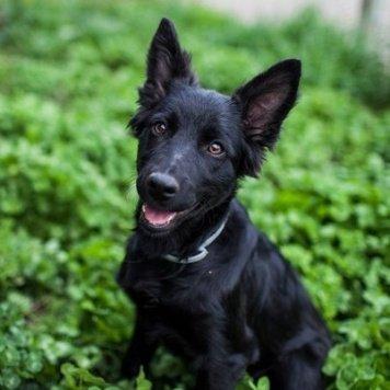 Гита - Собаки в добрые руки