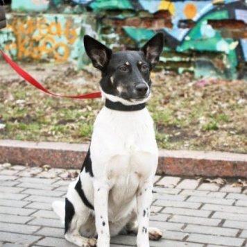 Ханя - Собаки в добрые руки
