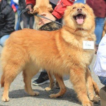 Ёлка - Собаки в добрые руки