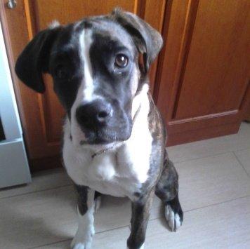 Джеси - Собаки в добрые руки