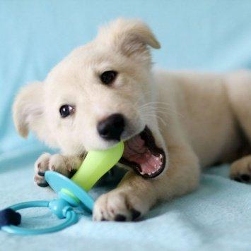 Джей - Собаки в добрые руки