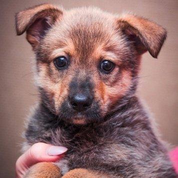 Стёпа - Собаки в добрые руки