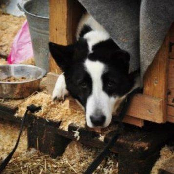 Проша - Собаки в добрые руки