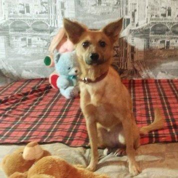 Тета - Собаки в добрые руки