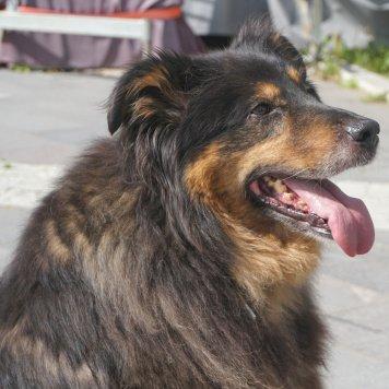 Чучундра - Собаки в добрые руки