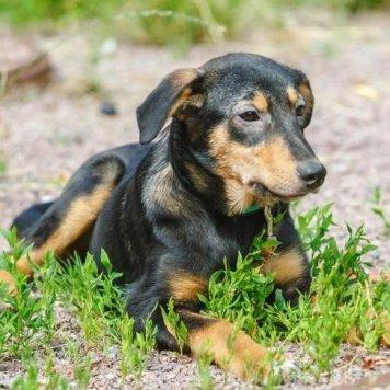 Лиза - Собаки в добрые руки