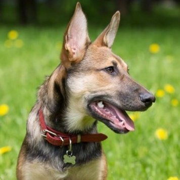 Брюсс - Собаки в добрые руки