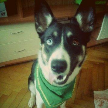 Марси - Собаки в добрые руки