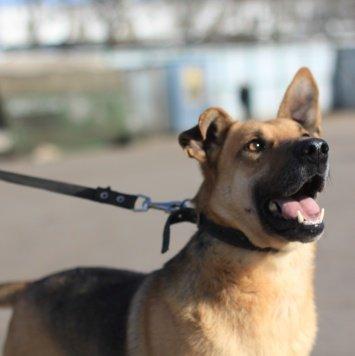 Драйв - Собаки в добрые руки
