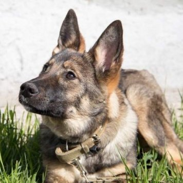 Есения - Собаки в добрые руки