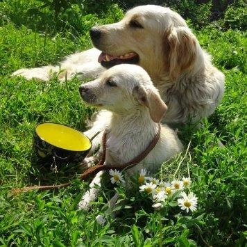 Бонни - Собаки в добрые руки