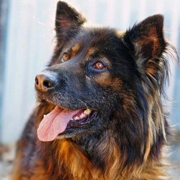 Миханя - Собаки в добрые руки