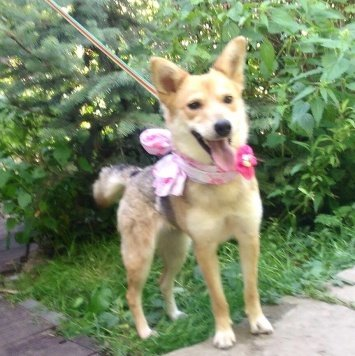 Регги - Собаки в добрые руки