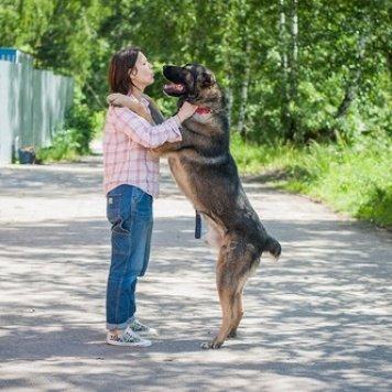 Батыр - Собаки в добрые руки
