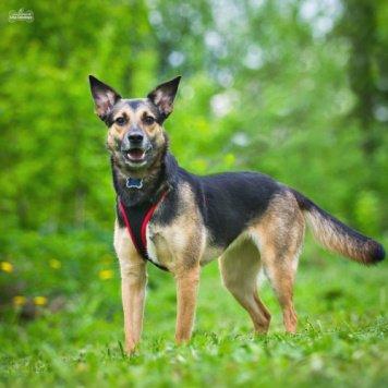 Никуся - Собаки в добрые руки