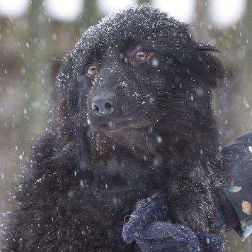 Маковка - Собаки в добрые руки