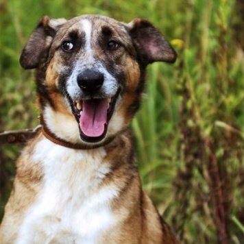 Борискин - Собаки в добрые руки