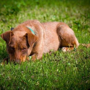 Риджби - Собаки в добрые руки