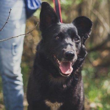 Чернушка - Собаки в добрые руки