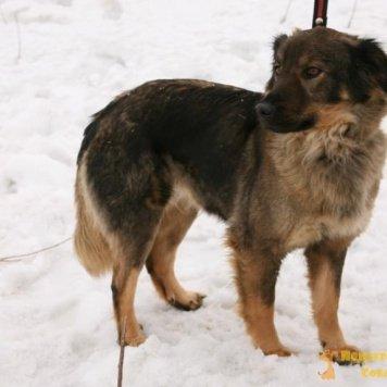 Лора - 2 - Собаки в добрые руки