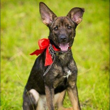 Бонифация - Собаки в добрые руки