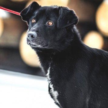 Бруно - Собаки в добрые руки