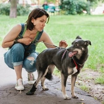 Баунти - Собаки в добрые руки