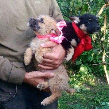 Манго и Лайма - Собаки в добрые руки