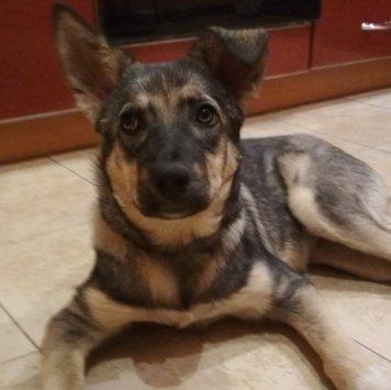 Девчуля - Собаки в добрые руки