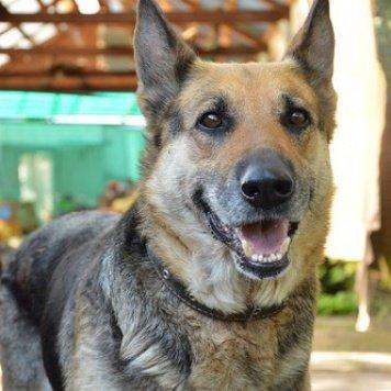 Орнела - Собаки в добрые руки