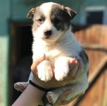 Щенки красавицы - Собаки в добрые руки
