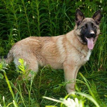 Ася и Стася - Собаки в добрые руки