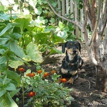 Василий - Собаки в добрые руки