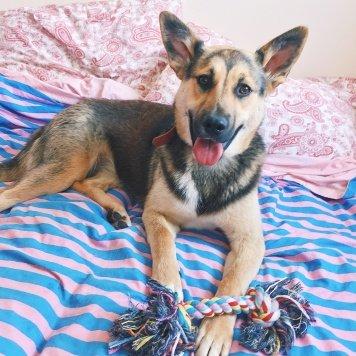 Летти - Собаки в добрые руки