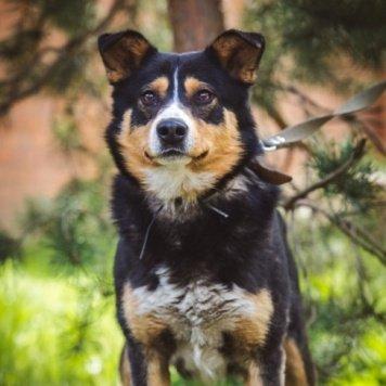 Алтай - Собаки в добрые руки