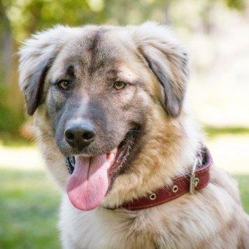 Чибис - Собаки в добрые руки