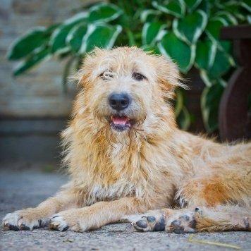 Фортуна - Собаки в добрые руки