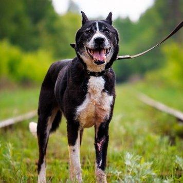 Смайл - Собаки в добрые руки